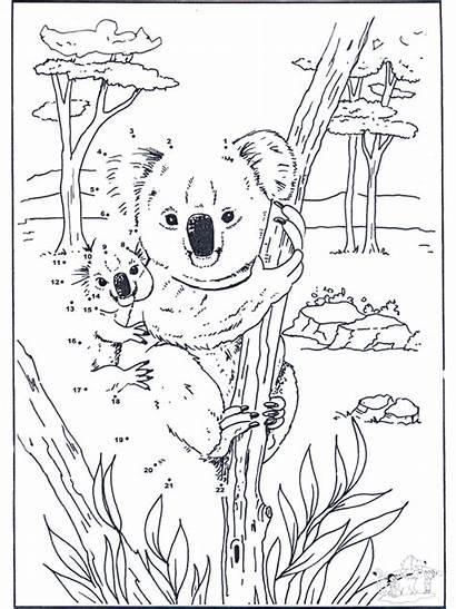Koala Dots Connect Dot Number Bear Fargelegg