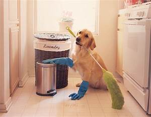 7 reasons why you should own a dog for Dog cleaning house