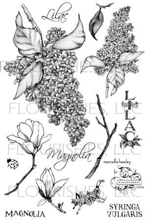 book of flourishes | The magnolia blossoms are separate stamps and I stamped them | Lilac