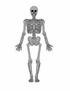 Skeletal System Diagram 8