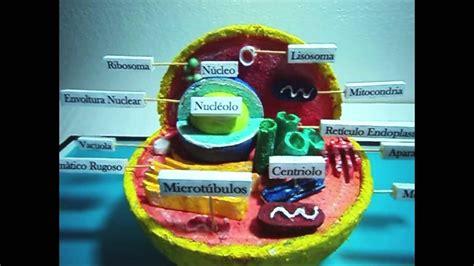maqueta de celula animal maqueta celula animal jpg proyecto de ciencias la pin celula