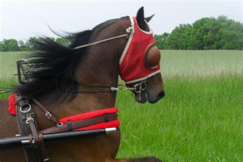 pony hackney horse pretty tack horses