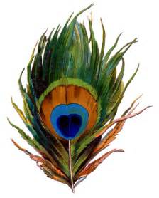 antique image stunning peacock feather the graphics