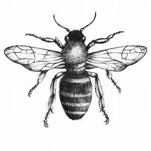 Drawn bee - Pencil and in color drawn bee
