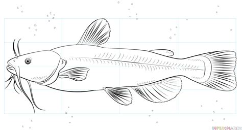 draw  catfish step  step drawing tutorials