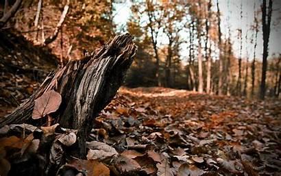 Deforestation Effects Ecosystem Negative Fall Erosion Control