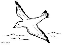 Disegno Gabbiano - disegni di gabbiani da stare e colorare gratis