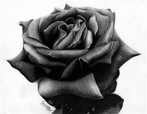 10+ Beautiful Rose Drawings for Inspiration 2017
