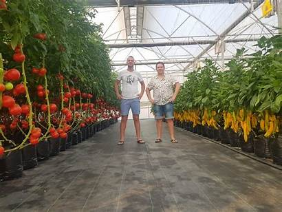 Hydroponic Tropical Growing Climates Various Ways Growers