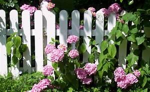 Hortensien Pflege Balkon : hortensien pflegen pflanzen s en pikieren ~ Lizthompson.info Haus und Dekorationen