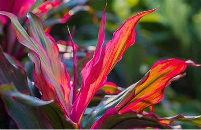 Plants Tropical Miami Plant Order