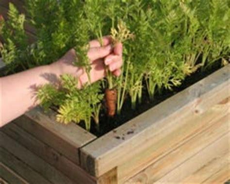 que planter dans potager que planter dans un petit potager