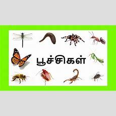 பூச்சிகளின் பெயர்கள் Learn Tamil Bugs And Insects Name For Kids Youtube