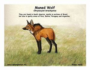 Wolf  Maned