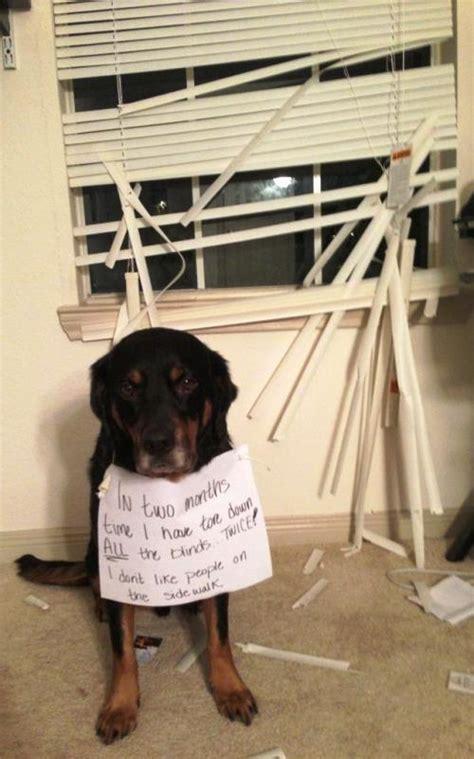 dog shaming hilarious pictures  pet shaming