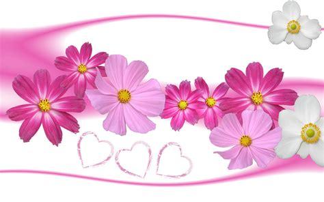 love wallpaper gambar gambar bunga berwarna merah muda