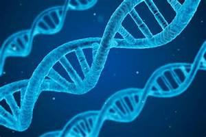 Study Reveals White Nationalists U2019 Reactions When Genetics