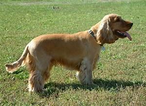 Los perros mas destacados parte 5 Taringa!