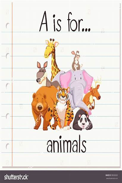 Animals Flashcard Letter Kaynak 4pint