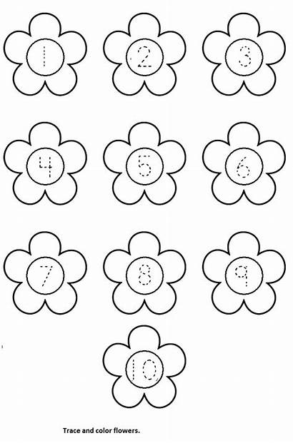 Worksheets Worksheet Flower Spring Kindergarten Preschool Printable