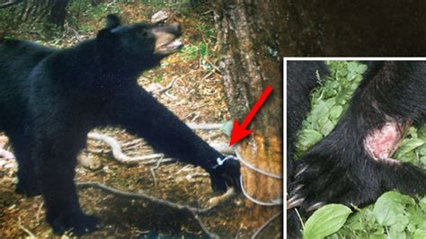 petition abolish    snare traps  changeorg