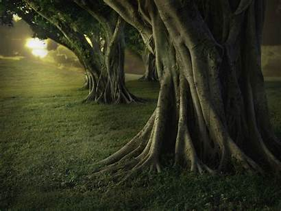 Tree Trees Forest Banyan Awesome Wallpapers Nature