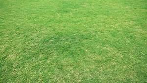 Wann Wächst Rasen : rasen vertikutieren der richtige zeitpunkt anleitung und m gliche risiken ~ Markanthonyermac.com Haus und Dekorationen