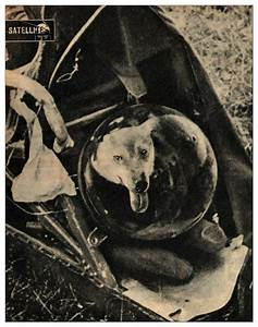 laika the space dog in full spacesuit gear 1957