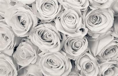 Rose Mural Roses Mist Flower Floral Wall