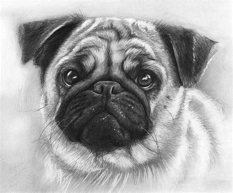 animal drawings  premium templates
