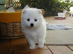 Five Cute Names for Small White Dog Breeds - Dog Breeds ...