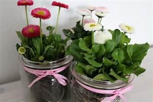 Frühlingsdeko Im Glas : bellis im weck glas ostern pinterest kommunion fr hling und tischdeko ~ Orissabook.com Haus und Dekorationen