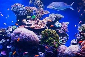 Welche Fische Passen Zusammen Aquarium : aquarium temperatur richtig einstellen ~ Lizthompson.info Haus und Dekorationen