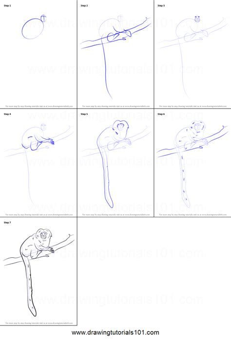 draw  golden marmoset printable step  step