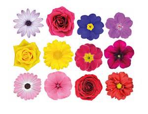 photo realistic flowers wall sticker set contemporary wall stickers