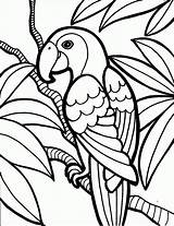 Parrot Coloring Birds Pages Printable Colouring Bird Parrots Adults Templates Printables Jungle Flowers Toddlers Drawing Adult Toddler Owl Animals Rainforest sketch template