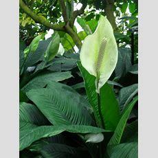 Easy Tropical Houseplants Hgtv