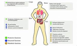 Main Functions Of Bacteria In The Human Body  Iec