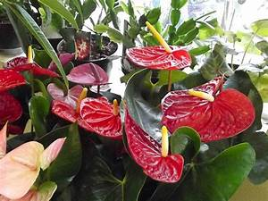 10, Tropical, House, Plants, Any, One, Can, Grow, Indoors, U2013, The, Self