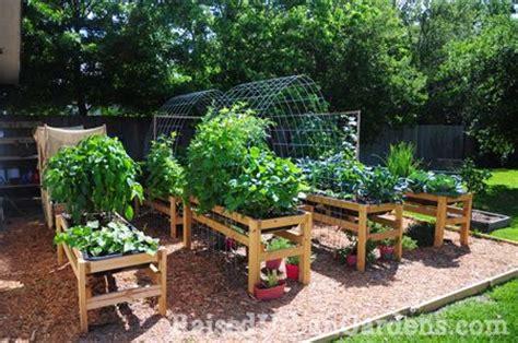 Gardening And The Elderly