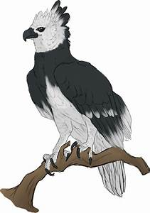 Harpy Eagle by mute-owl on DeviantArt