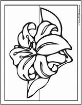 Lily Coloring Pages Spring Stargazer Flowers Drawing Sheet Printables Pdf Colorwithfuzzy Getdrawings Fun sketch template