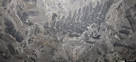 springfield coal fossil forest  largest  discovered