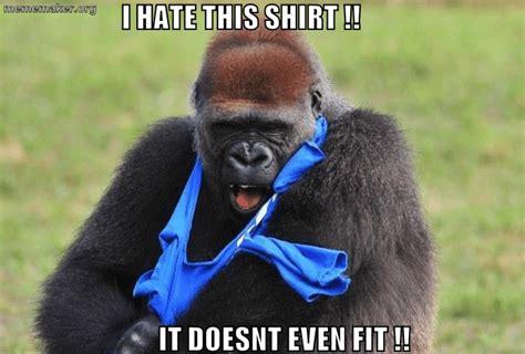 Gorilla Meme - funny gorilla meme www imgkid com the image kid has it