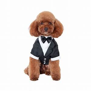 Pics For > Male Puppy Clothes