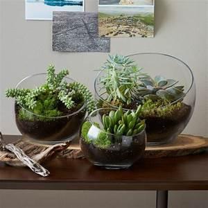 Künstliche Pflanzen Für Den Außenbereich : sukkulenten im glas im blickfang kreative deko ideen mit ~ Michelbontemps.com Haus und Dekorationen
