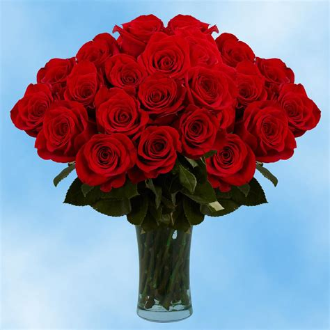 Globalrose Fresh Valentine's Day Red Roses (75 Extra Long ...