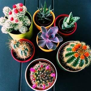 decorez avec les plantes grasses d39interieur With tapis chambre bébé avec livraison plantes fleuries