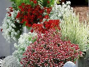 Balkon Gestaltungsideen Pflanzen : pflanzen in rot und wei f r balkon und terrasse ~ Lizthompson.info Haus und Dekorationen