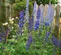 Die Schönsten Balkonpflanzen : die sch nsten blauen blumen im garten anbauen ~ Markanthonyermac.com Haus und Dekorationen